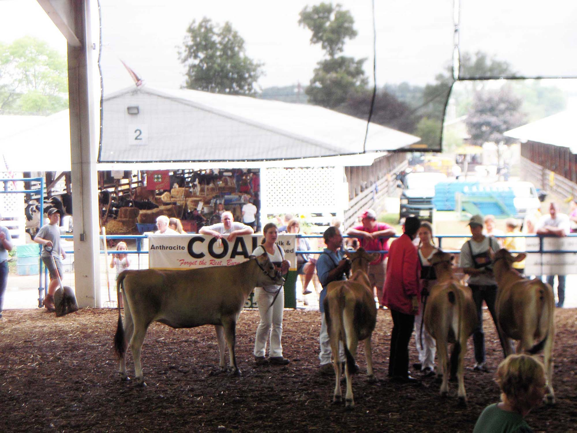 Bellvale Farms Jersey Cows and Jazmine