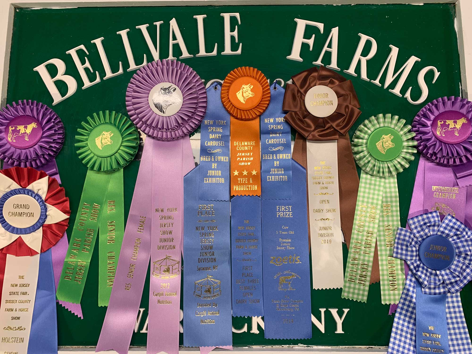 Bellvale Farms Jersey Cows